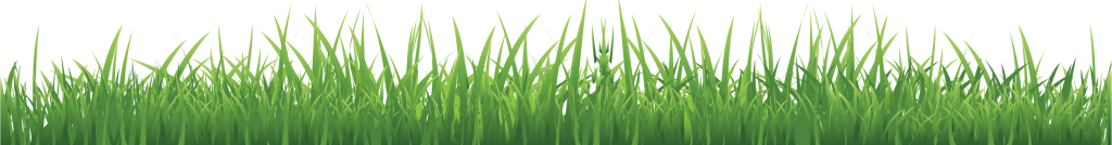 grass_PNG10854